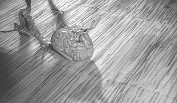 More brains!
