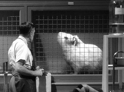 Somewhere in a secret desert facility, PETA scientists plot revenge against Richard Gere.