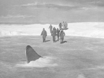 When in the arctic, be wary of ice sharks.